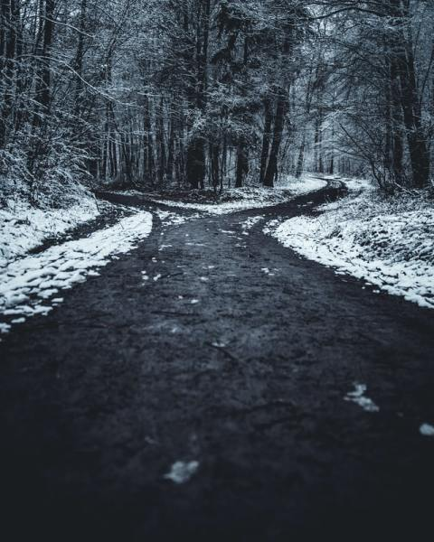 winter two paths